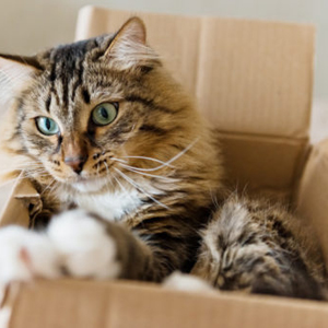 Pets Moving Services in Dubai – UAE